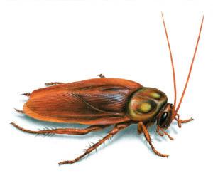 Plugin cockroach repellent.